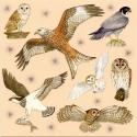 Birds of Prey Blank Greetings Card