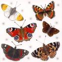 British Butterflies Blank Greetings Card