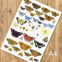 British Butterflies Identification A4 Poster