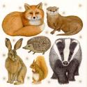 British Mammals Blank Greetings Card