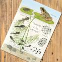 Frog Lifecycle Chart A5 Postcard