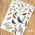 Garden Birds Identification A5 Postcard