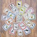Garden Birds Identification Flashcards