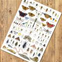 Invertebrates Insects Identification A3 Poster