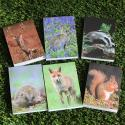 Six Animal Note Pads