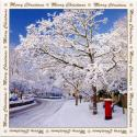 Snowy Postbox Blank Christmas Cards