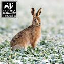 WT Hare Christmas Cards